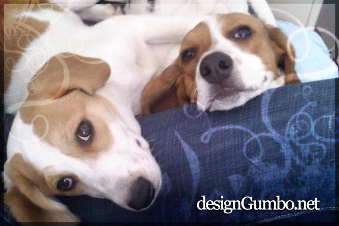 Lexi & Leeloo snuggling - the Grrr Girls
